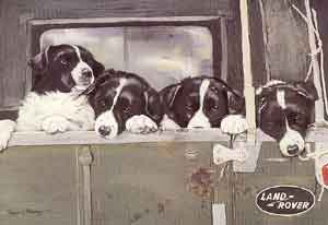 drawing of Border Collie pups in a Land Rover